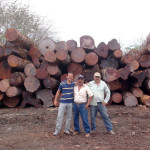 Mahogany Logs Guatemala